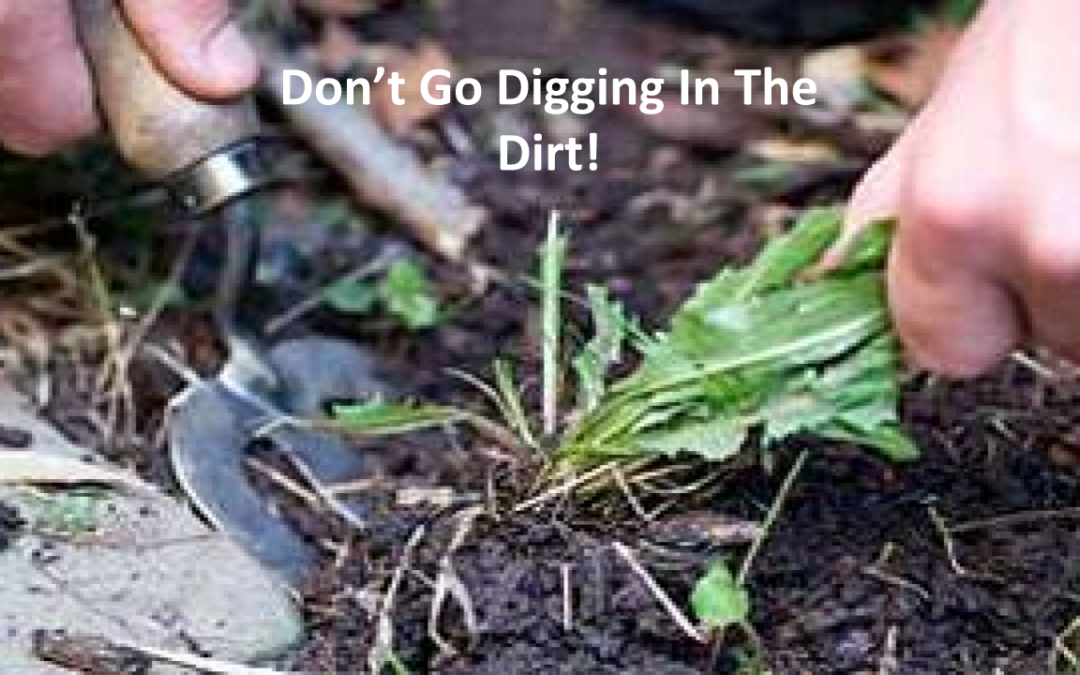Don't Go Digging In The Dirt